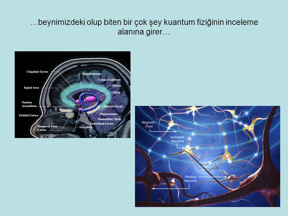 …beynimizdeki olup biten bir çok şey kuantum fiziğinin inceleme alanına girer…