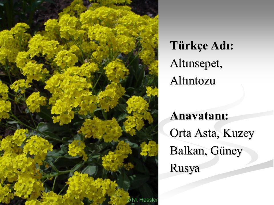 Türkçe Adı: Altınsepet,AltıntozuAnavatanı: Orta Asta, Kuzey Balkan, Güney Rusya