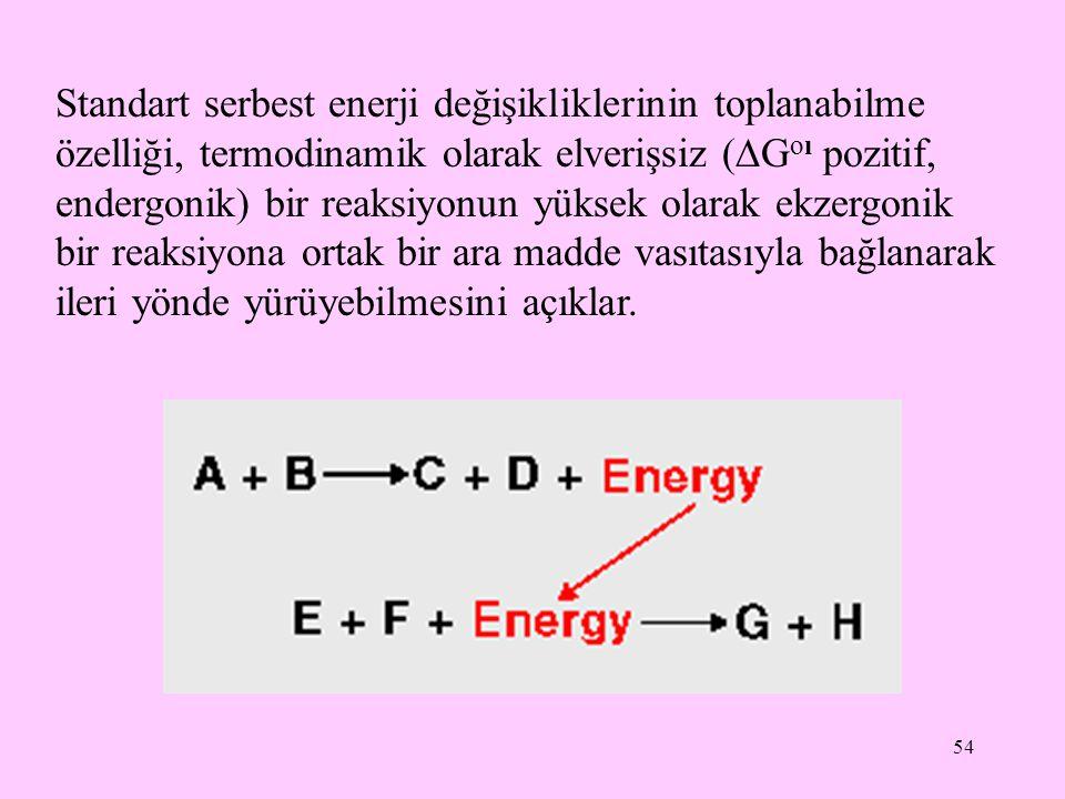 54 Standart serbest enerji değişikliklerinin toplanabilme özelliği, termodinamik olarak elverişsiz (  G oı pozitif, endergonik) bir reaksiyonun yükse