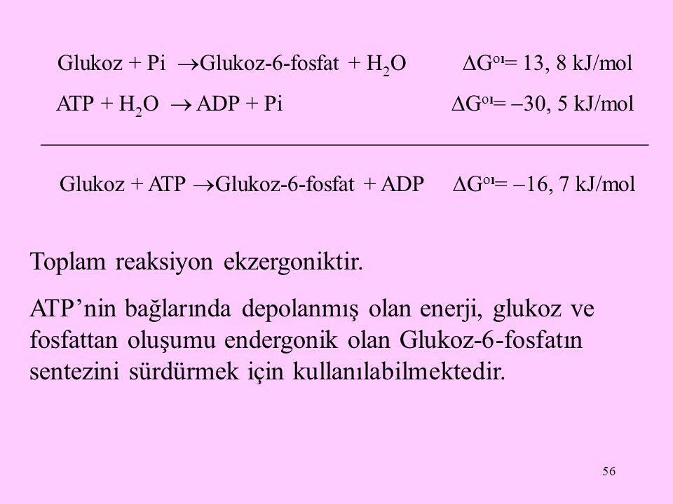 56 Glukoz + Pi  Glukoz-6-fosfat + H 2 O  G oı = 13, 8 kJ/mol ATP + H 2 O  ADP + Pi  G oı =  30, 5 kJ/mol  Glukoz + ATP