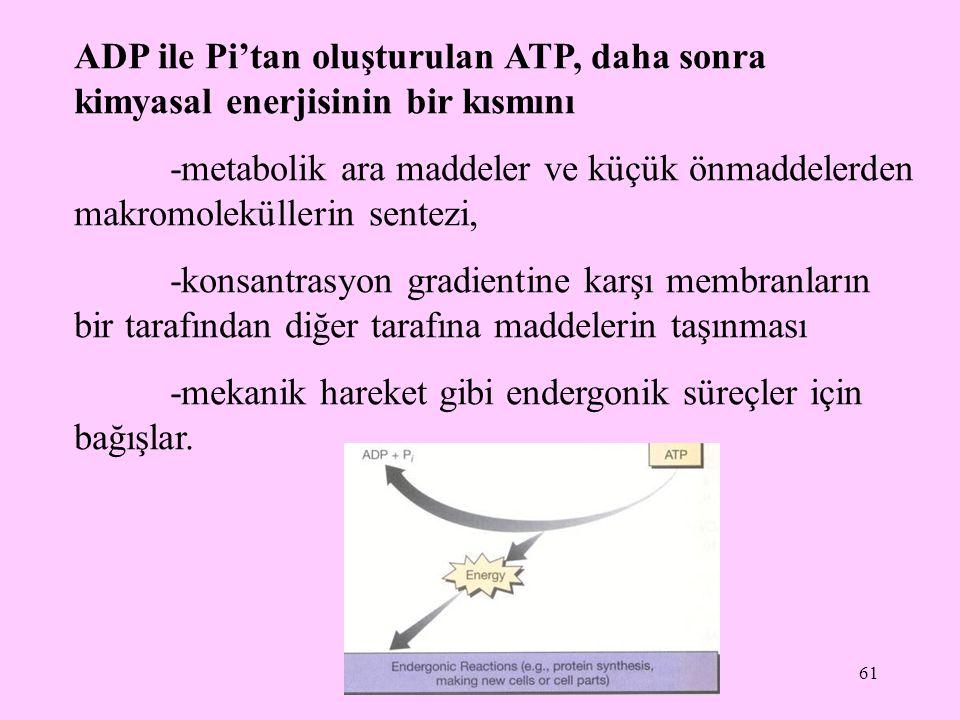 61 ADP ile Pi'tan oluşturulan ATP, daha sonra kimyasal enerjisinin bir kısmını -metabolik ara maddeler ve küçük önmaddelerden makromoleküllerin sentez
