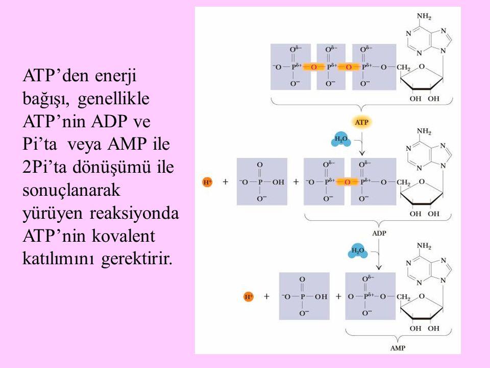 64 ATP'den enerji bağışı, genellikle ATP'nin ADP ve Pi'ta veya AMP ile 2Pi'ta dönüşümü ile sonuçlanarak yürüyen reaksiyonda ATP'nin kovalent katılımın