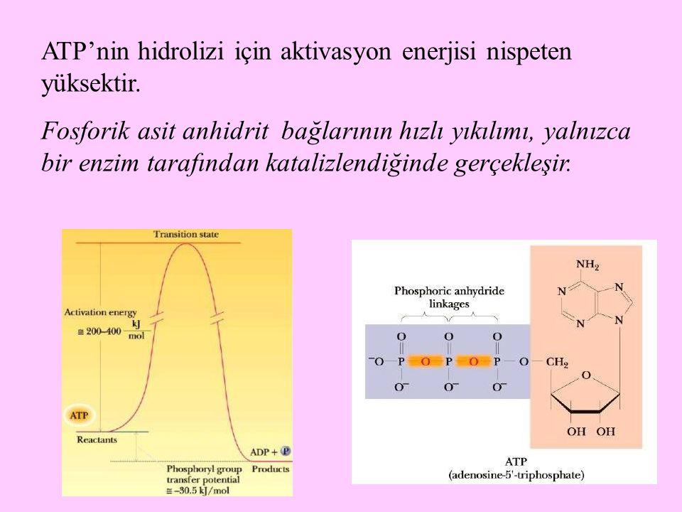 65 ATP'nin hidrolizi için aktivasyon enerjisi nispeten yüksektir. Fosforik asit anhidrit bağlarının hızlı yıkılımı, yalnızca bir enzim tarafından kata