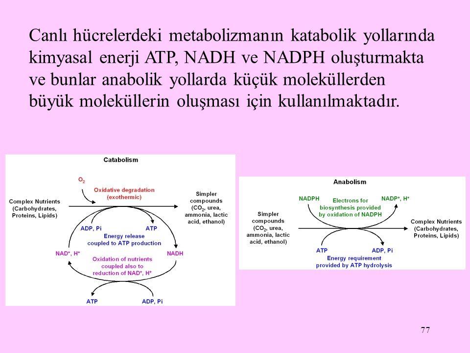 77 Canlı hücrelerdeki metabolizmanın katabolik yollarında kimyasal enerji ATP, NADH ve NADPH oluşturmakta ve bunlar anabolik yollarda küçük moleküller