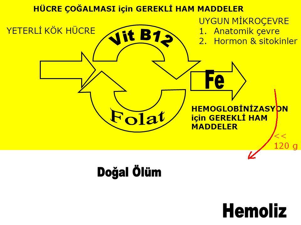 B12 vitaminin metabolizması 