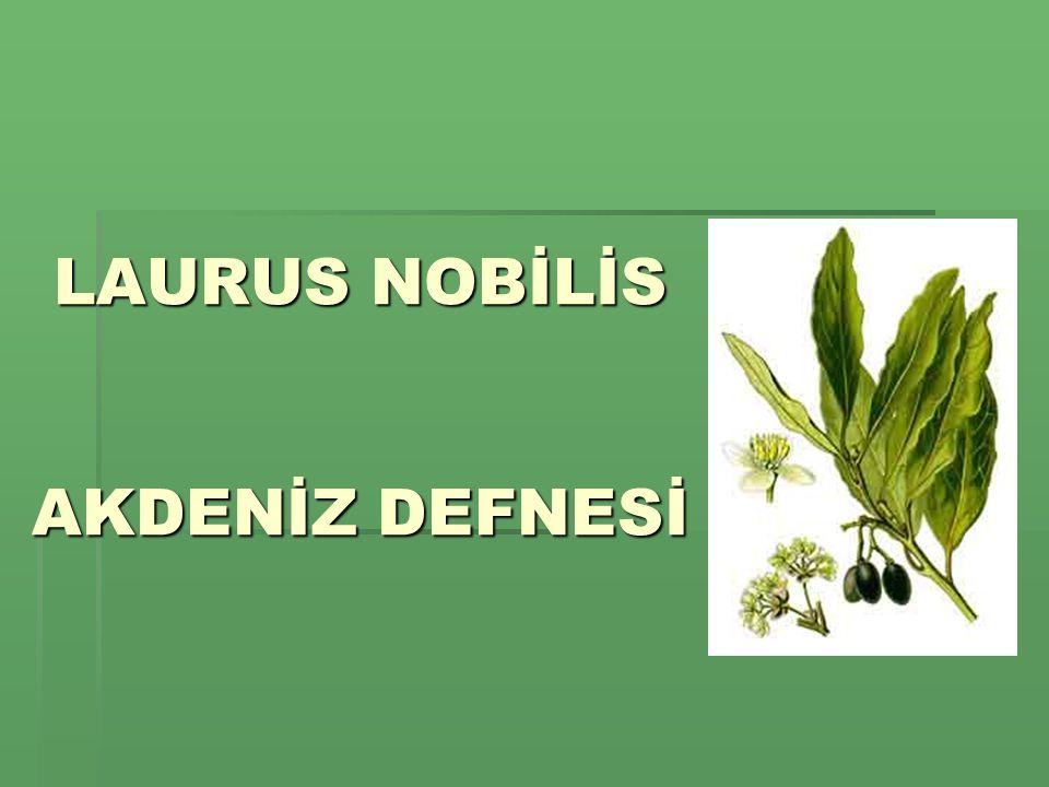 Bilimsel sınıflandırma Bilimsel sınıflandırmaBilimsel sınıflandırmaBilimsel sınıflandırma ÂlemÂlem: PlantaePlantae - Bitkiler BölümBölüm: MagnoliophytaMagnoliophyta - Kapalı tohumlular SınıfSınıf: MagnoliopsidaMagnoliopsida - İki çenekliler TakımTakım: Laurales Family LauraceaeLauraceae - Defnegiller CinsCins: Laurus TürTür: Laurus nobilis