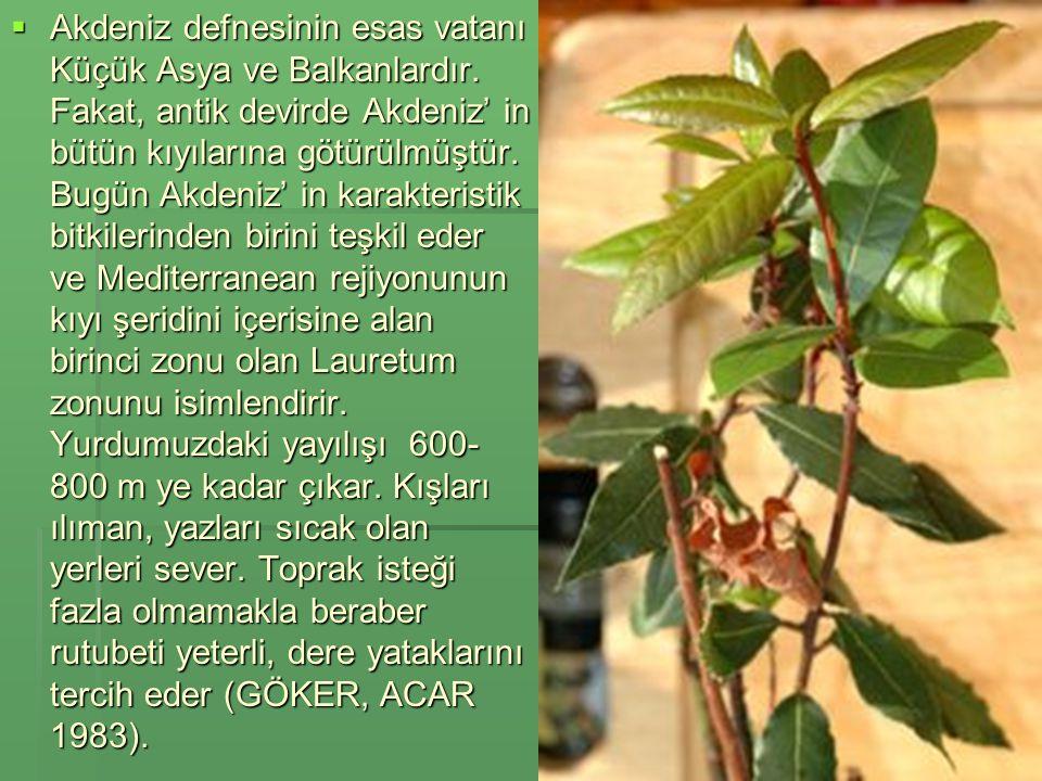 Ekonomik boyutu Ekonomik boyutu  Defne yaprağının yıllık üretimi yılda 8 bin tondur, bunun yaklaşık %80 ı Türkiye den kaynaklanır bu üretimden 8 milyon dolar gelir elde edilmektedir.