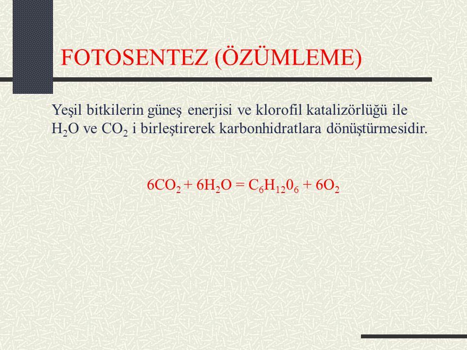 FOTOSENTEZ (ÖZÜMLEME) Yeşil bitkilerin güneş enerjisi ve klorofil katalizörlüğü ile H 2 O ve CO 2 i birleştirerek karbonhidratlara dönüştürmesidir.