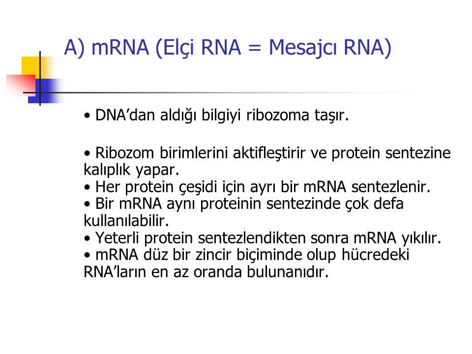 A) mRNA (Elçi RNA = Mesajcı RNA) DNA'dan aldığı bilgiyi ribozoma taşır. Ribozom birimlerini aktifleştirir ve protein sentezine kalıplık yapar. Her pro