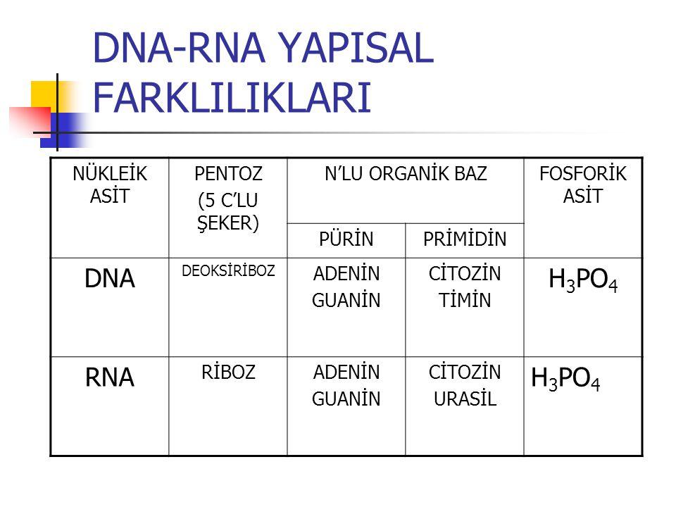 DNA-RNA YAPISAL FARKLILIKLARI NÜKLEİK ASİT PENTOZ (5 C'LU ŞEKER) N'LU ORGANİK BAZFOSFORİK ASİT PÜRİNPRİMİDİN DNA DEOKSİRİBOZ ADENİN GUANİN CİTOZİN TİM