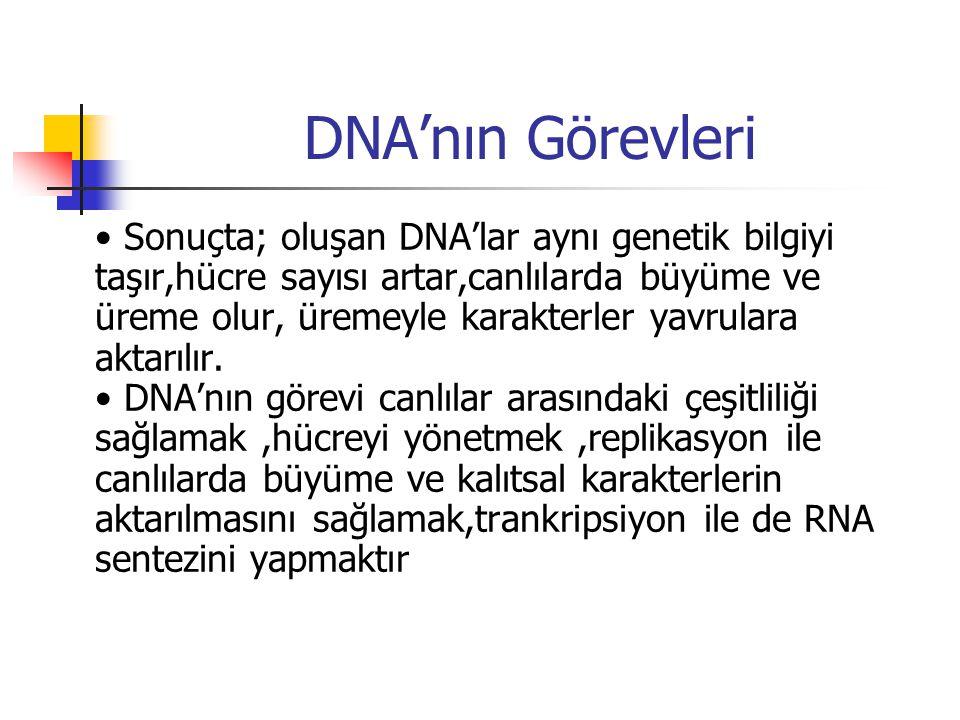 DNA'nın Görevleri Sonuçta; oluşan DNA'lar aynı genetik bilgiyi taşır,hücre sayısı artar,canlılarda büyüme ve üreme olur, üremeyle karakterler yavrulara aktarılır.
