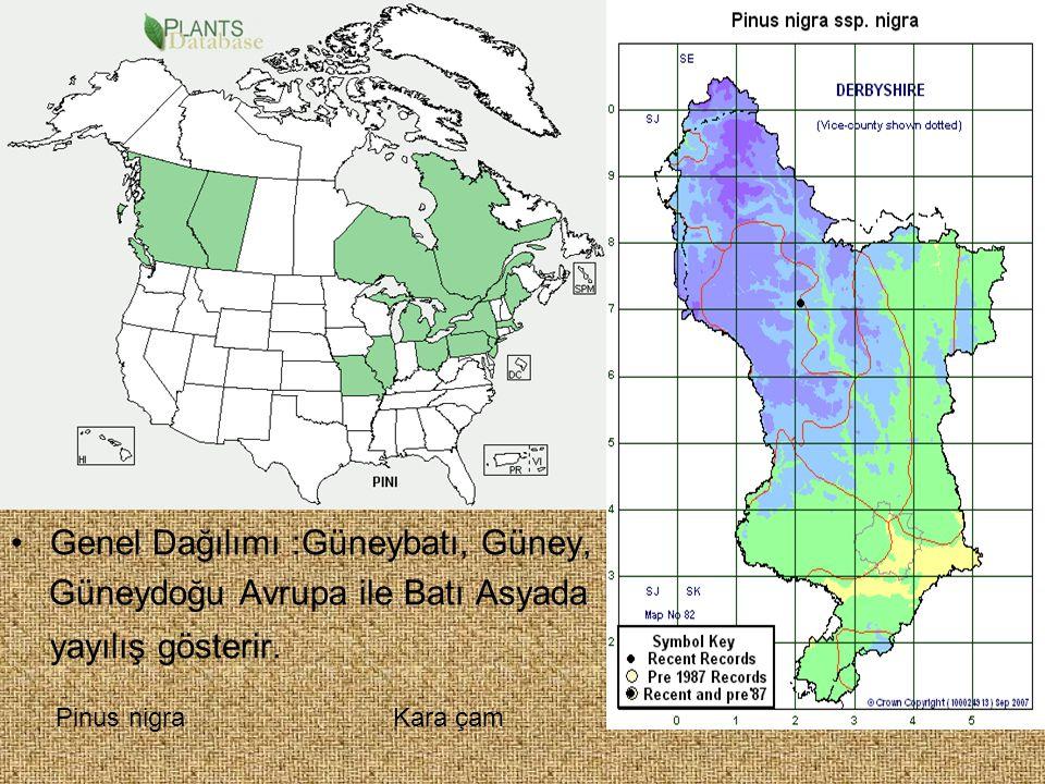 Genel Dağılımı :Güneybatı, Güney, Güneydoğu Avrupa ile Batı Asyada yayılış gösterir. Pinus nigraKara çam