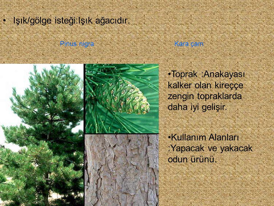 Işık/gölge isteği:Işık ağacıdır. Toprak :Anakayası kalker olan kireççe zengin topraklarda daha iyi gelişir. Kullanım Alanları :Yapacak ve yakacak odun