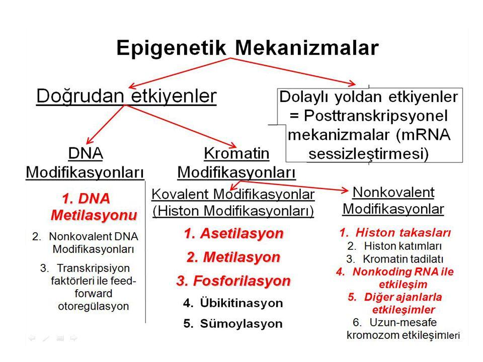 Sağlık Bakanlığı Türkiye'de 6-17 Aylık Çocuklarda ve Annelerinde Hemoglobin Ferritin D -Vitamini Düzeyi ve Demir Eksikliği Anemisi Durum Belirleme Yürütülen Programların Değerlendirilmesi Araştırması-2011