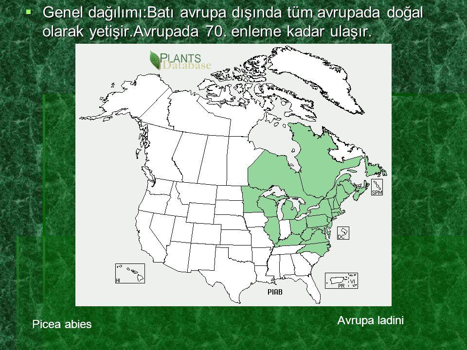  Genel dağılımı:Batı avrupa dışında tüm avrupada doğal olarak yetişir.Avrupada 70. enleme kadar ulaşır. Picea abies Avrupa ladini