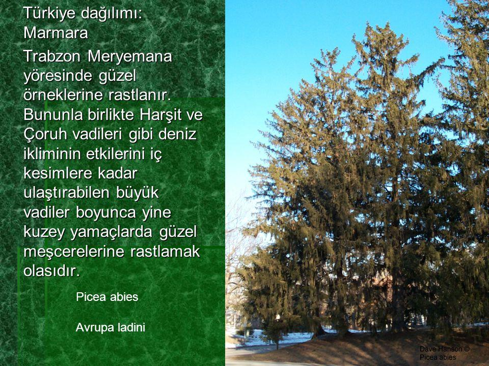 Türkiye dağılımı: Marmara Türkiye dağılımı: Marmara Trabzon Meryemana yöresinde güzel örneklerine rastlanır. Bununla birlikte Harşit ve Çoruh vadileri