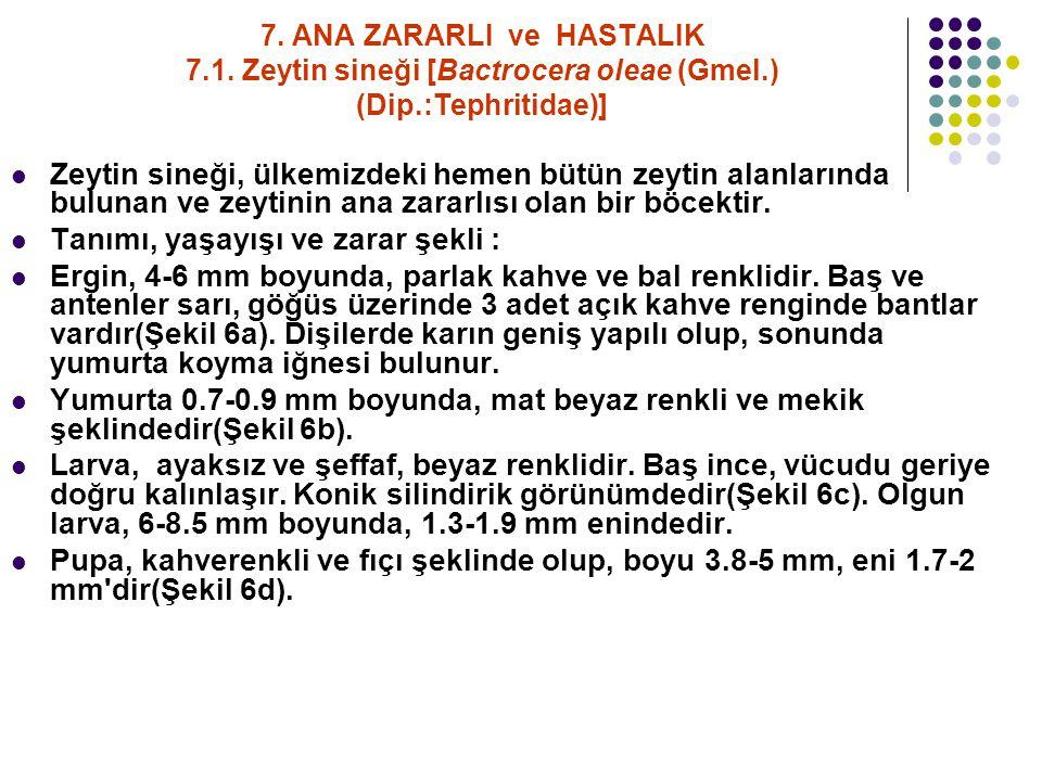 7.ANA ZARARLI ve HASTALIK 7.1.