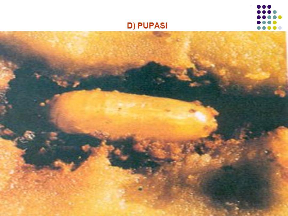 D) PUPASI