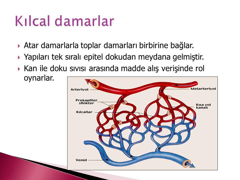 Atar damarlarla toplar damarları birbirine bağlar.  Yapıları tek sıralı epitel dokudan meydana gelmiştir.  Kan ile doku sıvısı arasında madde alış