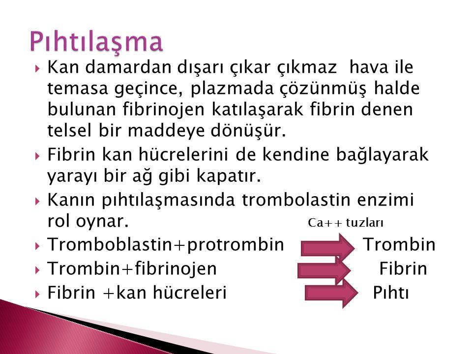  Kan damardan dışarı çıkar çıkmaz hava ile temasa geçince, plazmada çözünmüş halde bulunan fibrinojen katılaşarak fibrin denen telsel bir maddeye dön