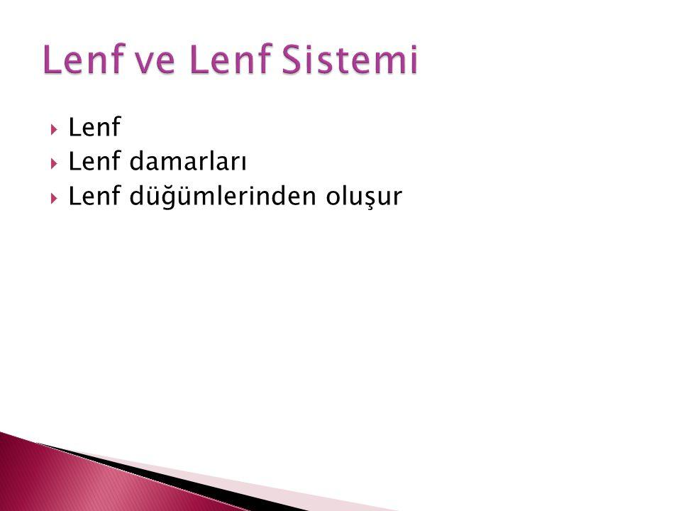  Lenf  Lenf damarları  Lenf düğümlerinden oluşur