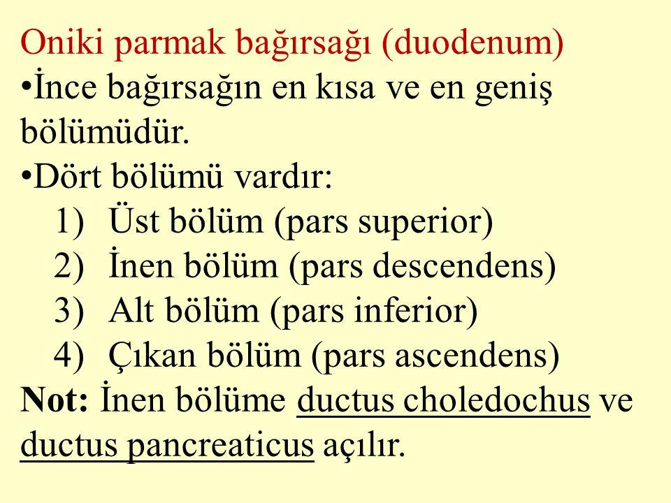 Oniki parmak bağırsağı (duodenum) İnce bağırsağın en kısa ve en geniş bölümüdür. Dört bölümü vardır: 1)Üst bölüm (pars superior) 2)İnen bölüm (pars de