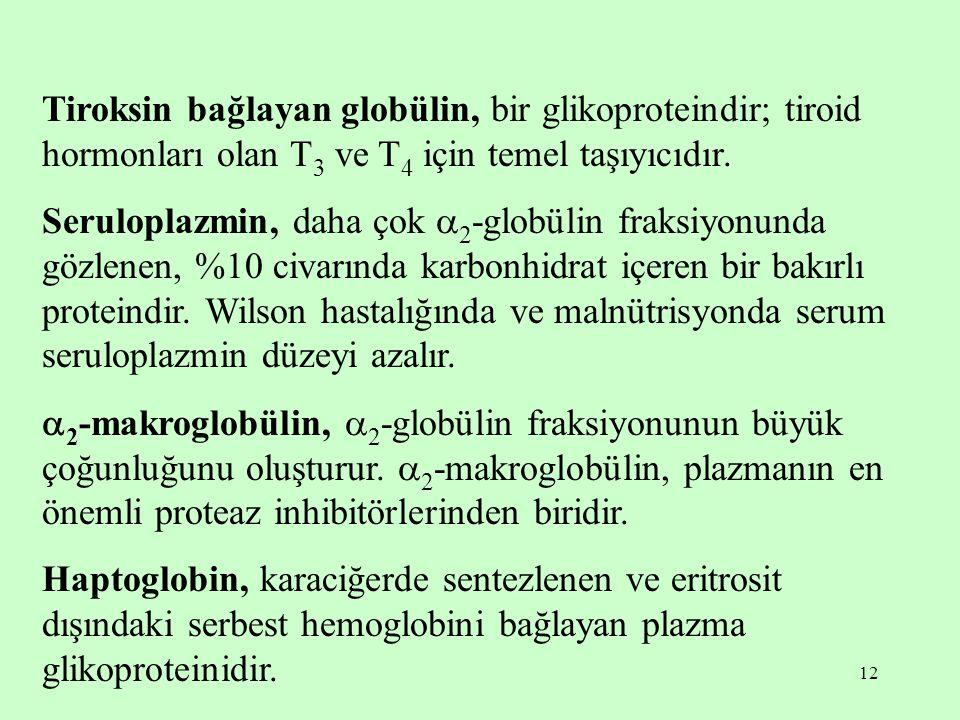 12 Tiroksin bağlayan globülin, bir glikoproteindir; tiroid hormonları olan T 3 ve T 4 için temel taşıyıcıdır.