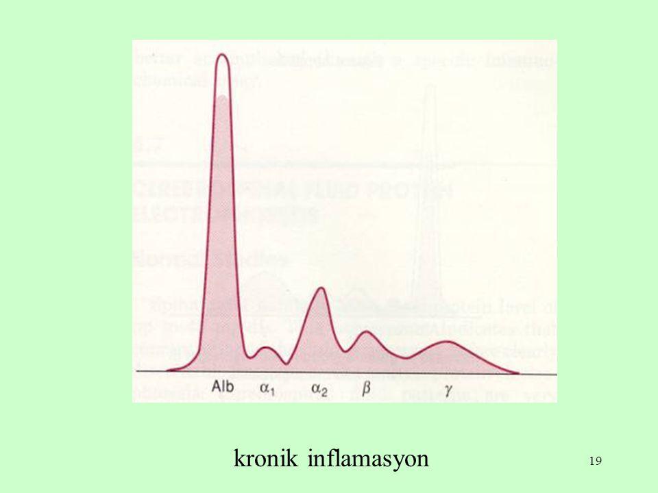 19 kronik inflamasyon