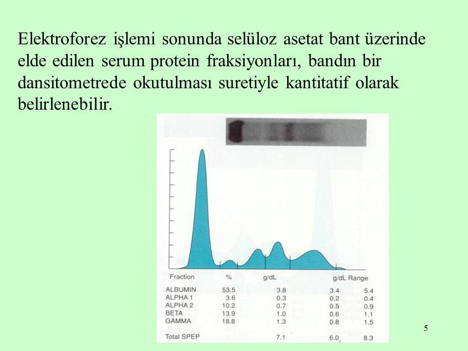 5 Elektroforez işlemi sonunda selüloz asetat bant üzerinde elde edilen serum protein fraksiyonları, bandın bir dansitometrede okutulması suretiyle kantitatif olarak belirlenebilir.