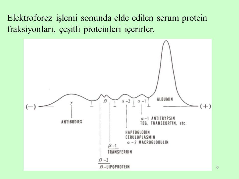 6 Elektroforez işlemi sonunda elde edilen serum protein fraksiyonları, çeşitli proteinleri içerirler.