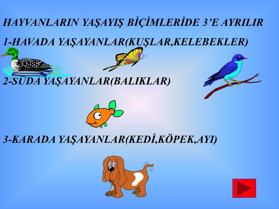 HAYVANLARIN YAŞAYIŞ BİÇİMLERİDE 3'E AYRILIR 1-HAVADA YAŞAYANLAR(KUŞLAR,KELEBEKLER) 2-SUDA YAŞAYANLAR(BALIKLAR) 3-KARADA YAŞAYANLAR(KEDİ,KÖPEK,AYI)