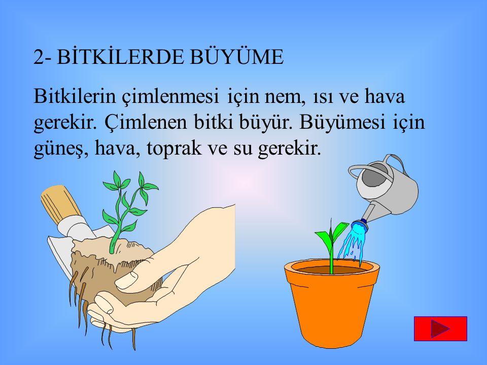 2- BİTKİLERDE BÜYÜME Bitkilerin çimlenmesi için nem, ısı ve hava gerekir. Çimlenen bitki büyür. Büyümesi için güneş, hava, toprak ve su gerekir.