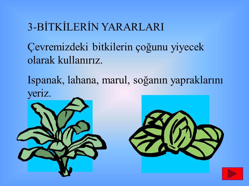 3-BİTKİLERİN YARARLARI Çevremizdeki bitkilerin çoğunu yiyecek olarak kullanırız. Ispanak, lahana, marul, soğanın yapraklarını yeriz.