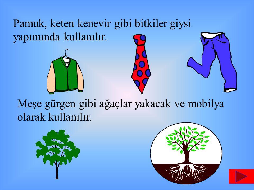 Pamuk, keten kenevir gibi bitkiler giysi yapımında kullanılır. Meşe gürgen gibi ağaçlar yakacak ve mobilya olarak kullanılır.