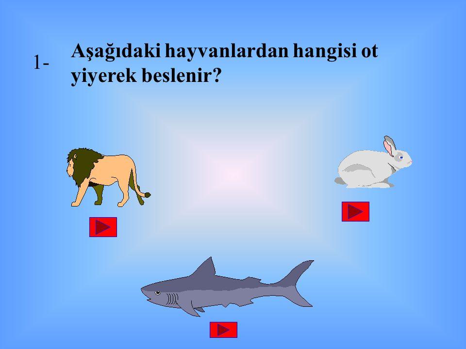 Aşağıdaki hayvanlardan hangisi ot yiyerek beslenir? 1-