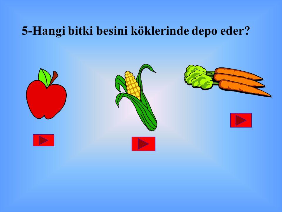 5-Hangi bitki besini köklerinde depo eder?