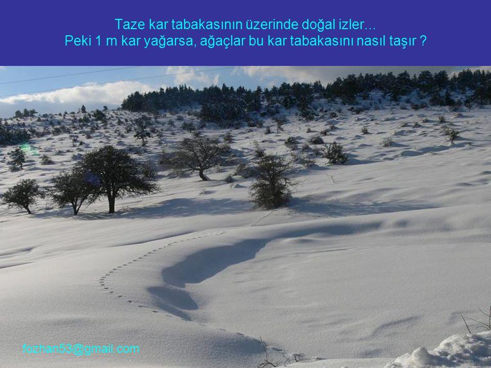 Taze kar tabakasının üzerinde doğal izler... Peki 1 m kar yağarsa, ağaçlar bu kar tabakasını nasıl taşır ? fozhan53@gmail.com