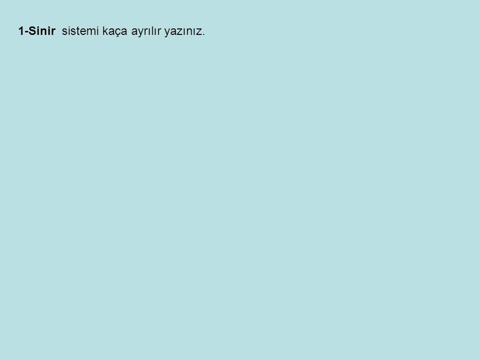 1-Systema nervosum cerebrospinale 2-Systema nervosum autonomicum 1- Systema nervosum cerebrospinale (serebrospinal sistem) Bu sistem iki kısma ayrılır.
