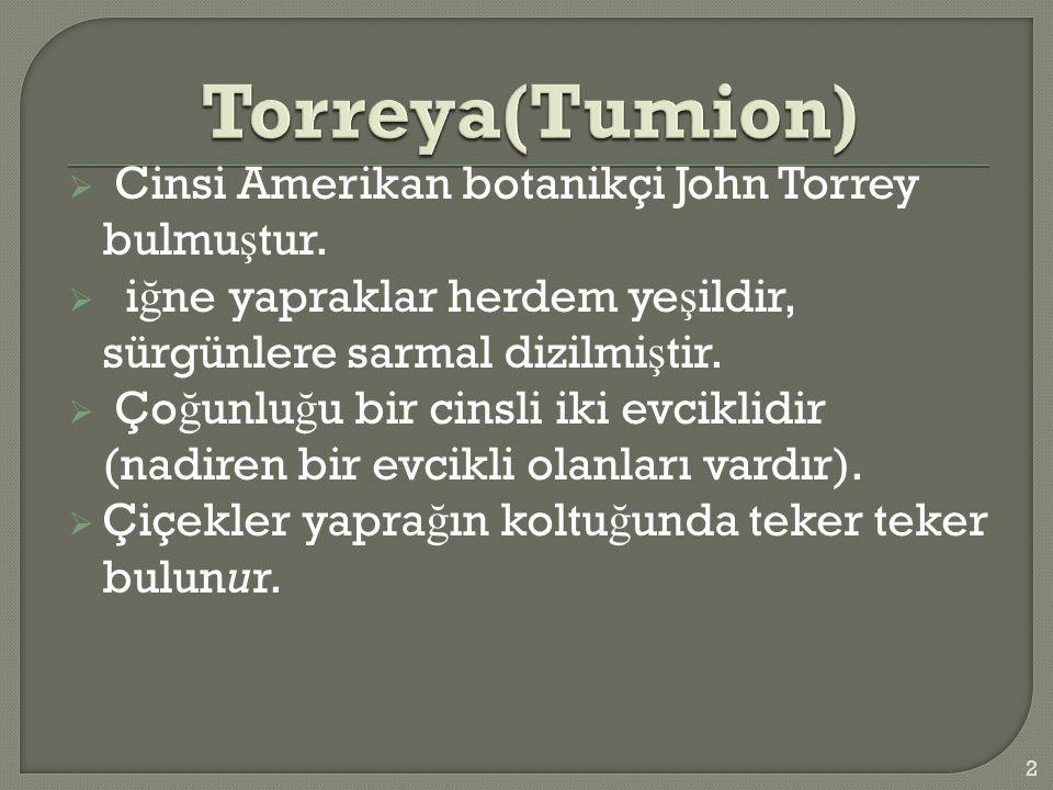  Cinsi Amerikan botanikçi John Torrey bulmu ş tur.
