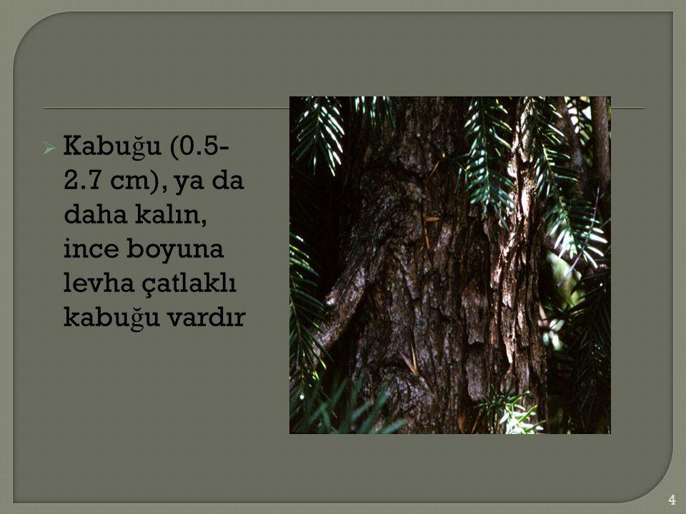  Kabu ğ u (0.5- 2.7 cm), ya da daha kalın, ince boyuna levha çatlaklı kabu ğ u vardır 4