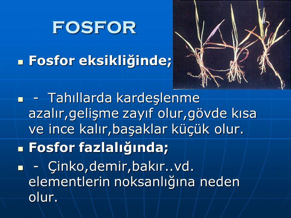 FOSFOR Fosfor eksikliğinde; Fosfor eksikliğinde; - Tahıllarda kardeşlenme azalır,gelişme zayıf olur,gövde kısa ve ince kalır,başaklar küçük olur.