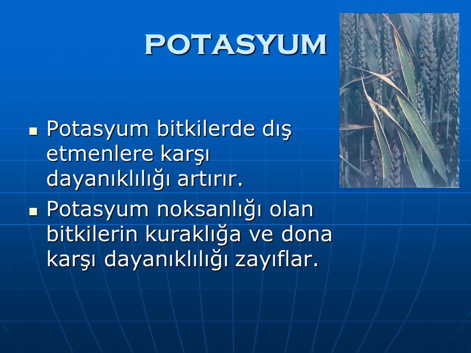 POTASYUM Potasyum bitkilerde dış etmenlere karşı dayanıklılığı artırır. Potasyum bitkilerde dış etmenlere karşı dayanıklılığı artırır. Potasyum noksan