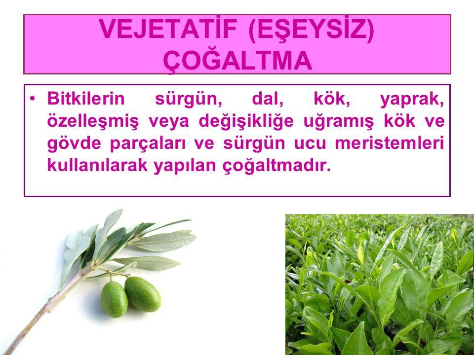 VEJETATİF (EŞEYSİZ) ÇOĞALTMA Bitkilerin sürgün, dal, kök, yaprak, özelleşmiş veya değişikliğe uğramış kök ve gövde parçaları ve sürgün ucu meristemler