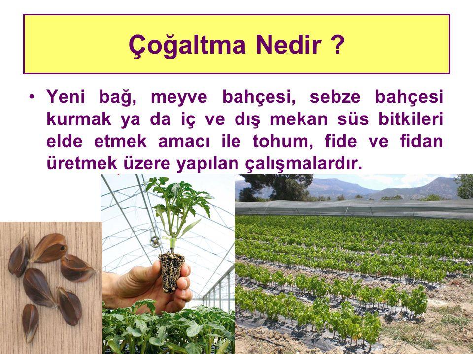 Çoğaltma Nedir ? Yeni bağ, meyve bahçesi, sebze bahçesi kurmak ya da iç ve dış mekan süs bitkileri elde etmek amacı ile tohum, fide ve fidan üretmek ü