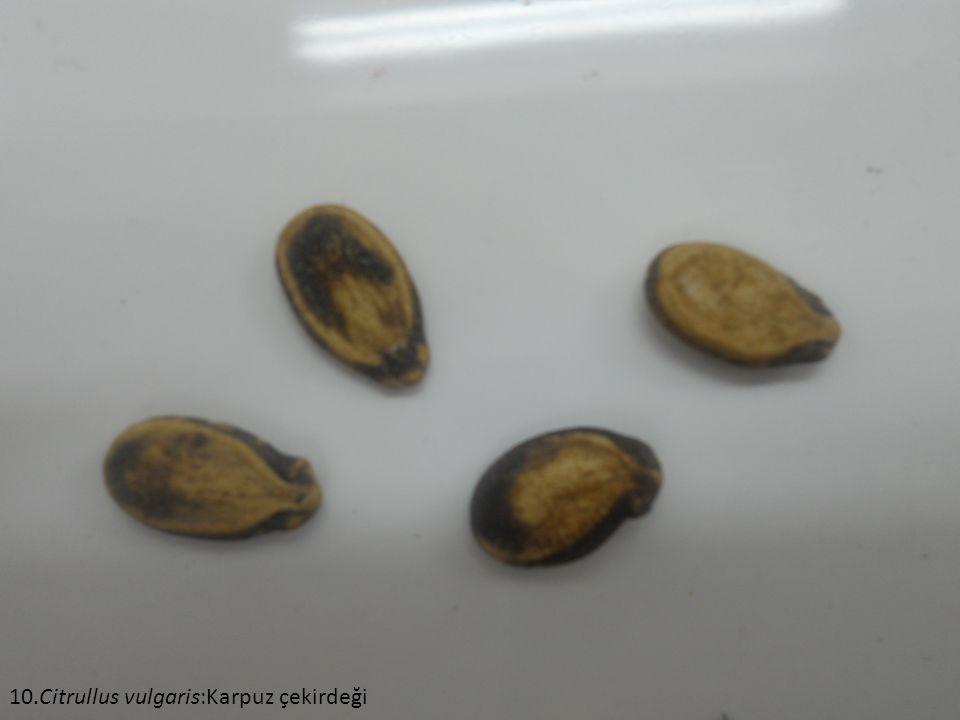 10.Citrullus vulgaris:Karpuz çekirdeği