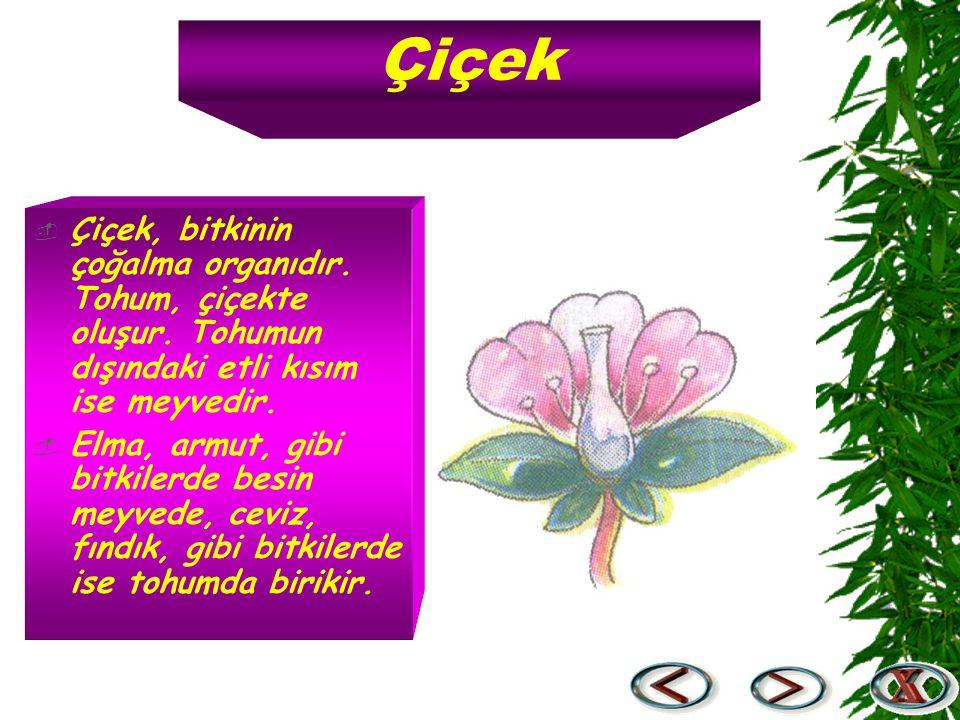 Çiçek  Çiçek, bitkinin çoğalma organıdır. Tohum, çiçekte oluşur. Tohumun dışındaki etli kısım ise meyvedir.  Elma, armut, gibi bitkilerde besin meyv