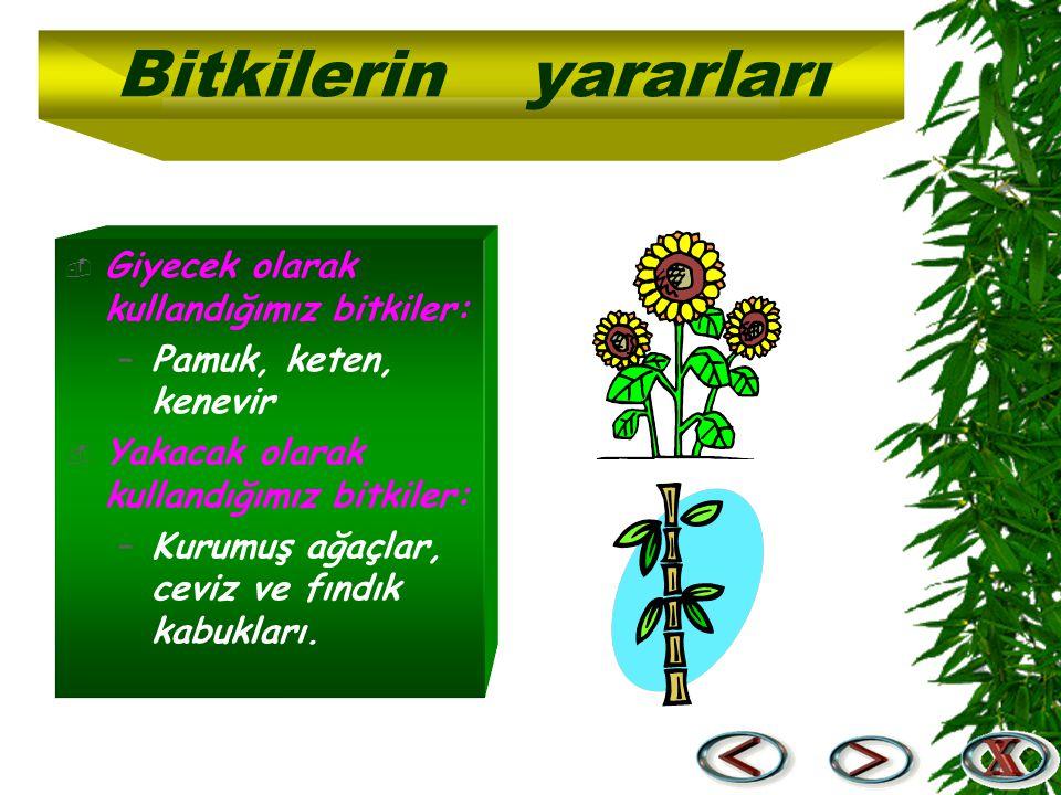  Giyecek olarak kullandığımız bitkiler: –Pamuk, keten, kenevir  Yakacak olarak kullandığımız bitkiler: –Kurumuş ağaçlar, ceviz ve fındık kabukları.