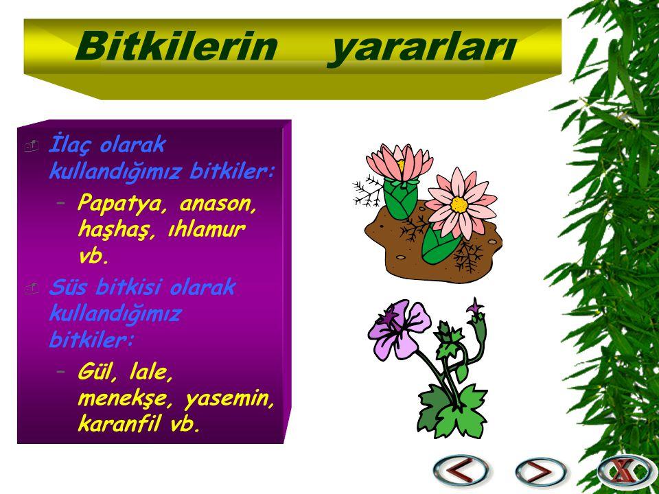  İlaç olarak kullandığımız bitkiler: –Papatya, anason, haşhaş, ıhlamur vb.  Süs bitkisi olarak kullandığımız bitkiler: –Gül, lale, menekşe, yasemin,