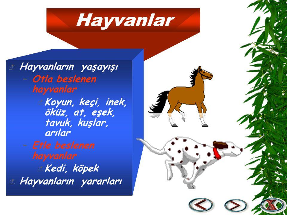 Hayvanlar  Hayvanların yaşayışı –Otla beslenen hayvanlar  Koyun, keçi, inek, öküz, at, eşek, tavuk, kuşlar, arılar –Etle beslenen hayvanlar  Kedi,