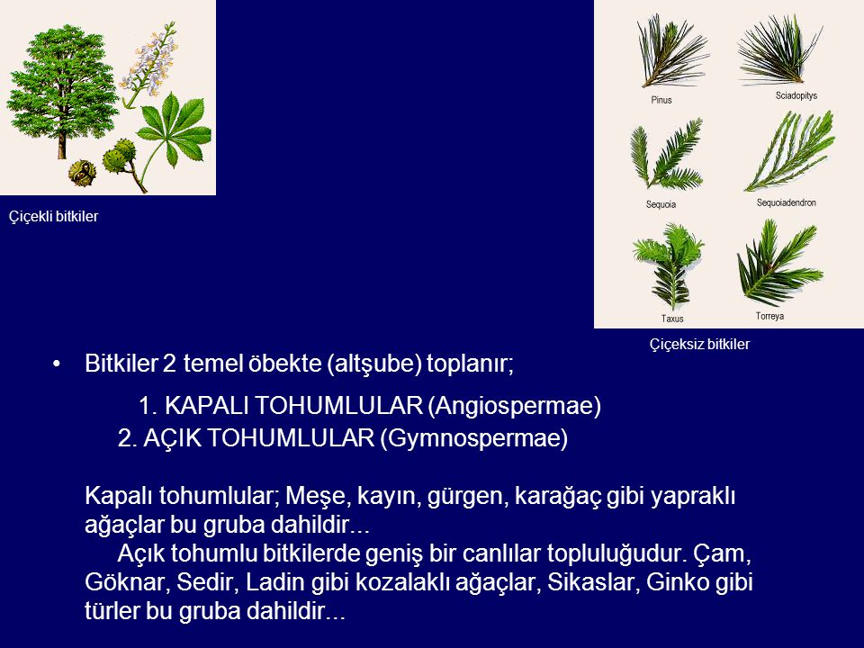 Bitkiler 2 temel öbekte (altşube) toplanır; 1. KAPALI TOHUMLULAR (Angiospermae) 2. AÇIK TOHUMLULAR (Gymnospermae) Kapalı tohumlular; Meşe, kayın, gürg